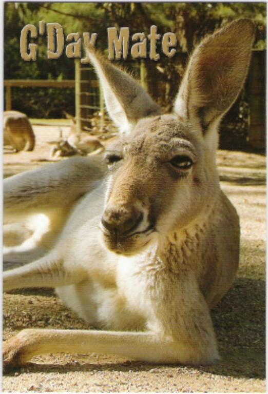gday-kanga