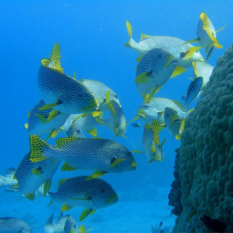 diving-cairns1